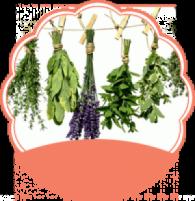 Gyógynövények a bőrápolásban